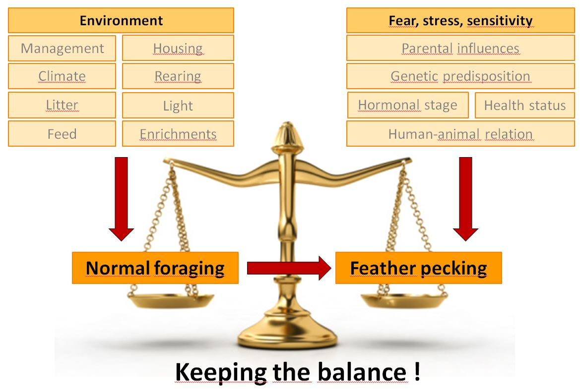 Balance of causes of feather pecking